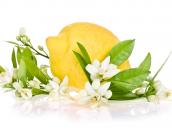 15 χρήσεις του λεμονιού… που δεν γνωρίζατε!