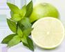 lemon_icon4