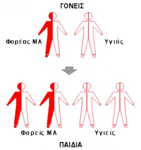 thalassaemia-icon4