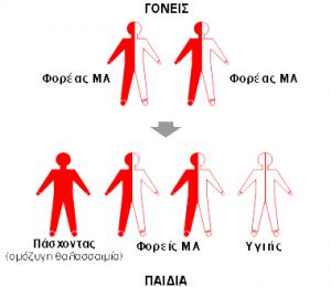 thalassaemia-icon5